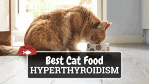 The Best Cat Food for Hyperthyroidism