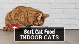 The Best Cat Food for Indoor Cats