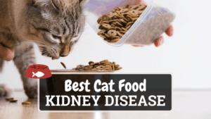 The Best Cat Food for Kidney Disease