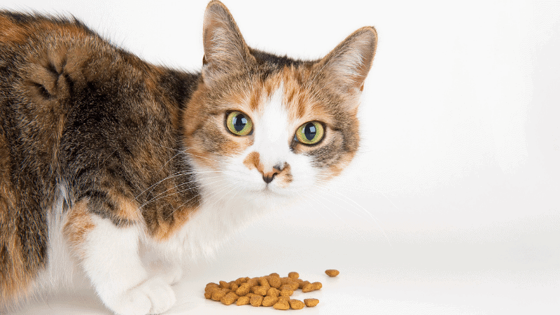 The Best Cat Food for Hairballs