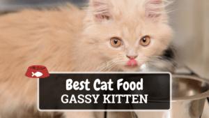 The Best Cat Food for Gassy Kitten