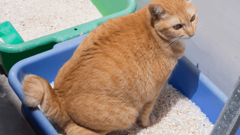 The Best Cat Food for Constipation