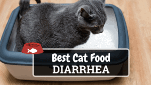 The Best Cat Food For Diarrhea