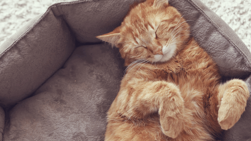 The Best Cat Food for Sensitive Stomach