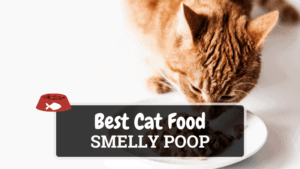 The Best Cat Food for Smelly Poop