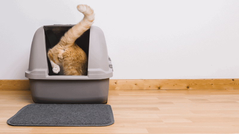 The Best Cat Food for Urinary Health