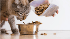 Best cat Food for IBD