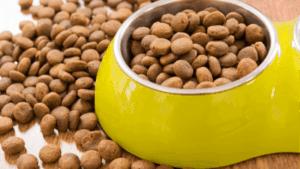 Best cat Food for pancreatitis