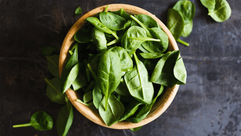 Can Cats Eat Basil? (Yes, Here's the Answer)