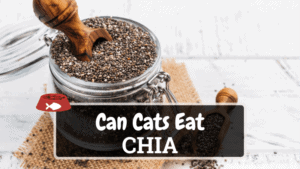 Can Cats Eat Chia? Find the Answer