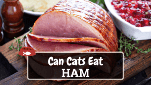 Can Cats Eat Ham? Things You Need to Know