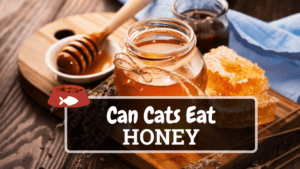 Can Cats Eat Honey? Find Out Here!