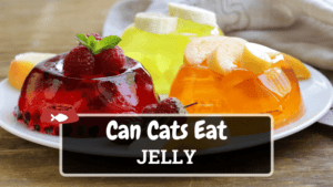 Can Cats Eat Jelly? Is it Safe for Cats?