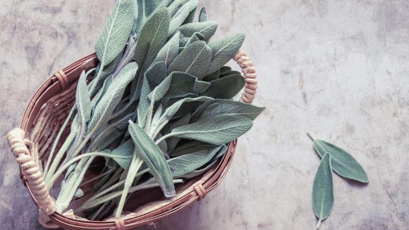 Can Cats Eat Sage? Yes, Here's The Answer