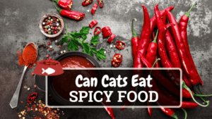 Can Cats Eat Spicy Food? Find Out Here