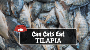 Can Cats Eat Tilapia? (Hint: Yes, But Limited Amounts)