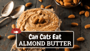 Can Cats Eat Almond Butter? (Processed vs Homemade)
