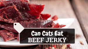 Can Cats Eat Beef Jerky? Yes, Here's the Answer