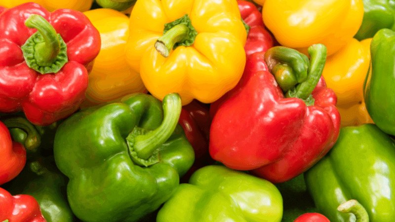 Can Cats Eat Bell Pepper? Is it Safe for Cats?