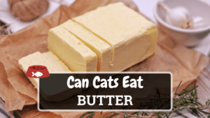 Can Cats Eat Butter? (Hint: It Depends on the Quantity)
