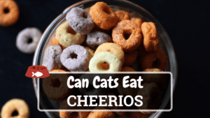 Can Cats Eat Cheerios? Is it Safe for Cats?