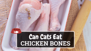 Can Cats Eat Chicken Bones? Yes, But Not All Types