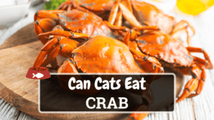 Can Cats Eat Crab? Is it Safe for Cats?