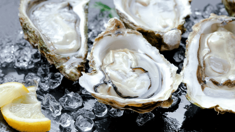Can Cats Eat Oysters? Is it Safe for Cats?