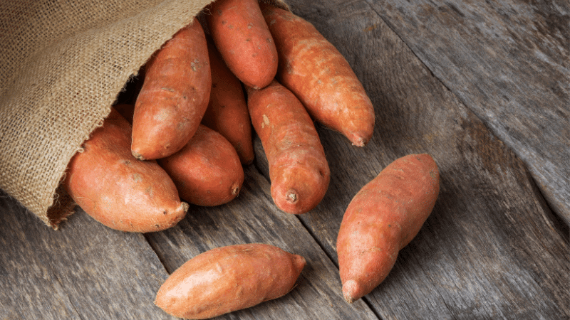 Can Cats Eat Sweet Potatoes? Is it Toxic to Cats?