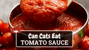 Can Cats Eat Tomato Sauce? Find Out Here