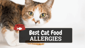 The Best Cat Food for Allergies