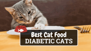 The Best Cat Food for Diabetic Cats